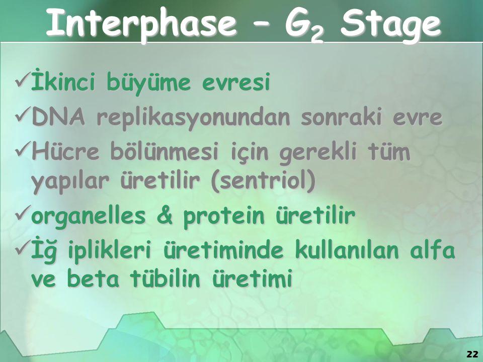 22 Interphase – G 2 Stage İkinci büyüme evresi İkinci büyüme evresi DNA replikasyonundan sonraki evre DNA replikasyonundan sonraki evre Hücre bölünmesi için gerekli tüm yapılar üretilir (sentriol) Hücre bölünmesi için gerekli tüm yapılar üretilir (sentriol) organelles & protein üretilir organelles & protein üretilir İğ iplikleri üretiminde kullanılan alfa ve beta tübilin üretimi İğ iplikleri üretiminde kullanılan alfa ve beta tübilin üretimi