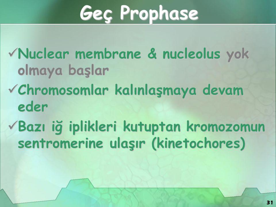 31 Geç Prophase Nuclear membrane & nucleolus yok olmaya başlar Nuclear membrane & nucleolus yok olmaya başlar Chromosomlar kalınlaşmaya devam eder Chromosomlar kalınlaşmaya devam eder Bazı iğ iplikleri kutuptan kromozomun sentromerine ulaşır (kinetochores) Bazı iğ iplikleri kutuptan kromozomun sentromerine ulaşır (kinetochores)