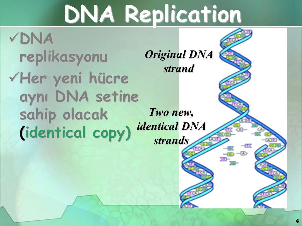 4 DNA Replication DNA replikasyonu DNA replikasyonu Her yeni hücre aynı DNA setine sahip olacak (identical copy) Her yeni hücre aynı DNA setine sahip