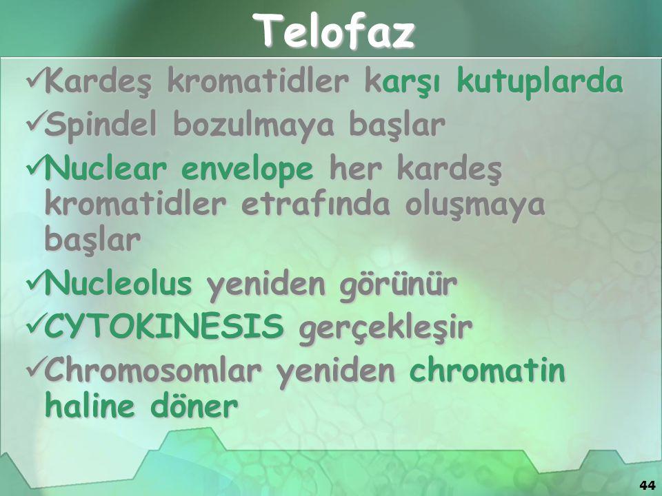 44 Telofaz Kardeş kromatidler karşı kutuplarda Kardeş kromatidler karşı kutuplarda Spindel bozulmaya başlar Spindel bozulmaya başlar Nuclear envelope her kardeş kromatidler etrafında oluşmaya başlar Nuclear envelope her kardeş kromatidler etrafında oluşmaya başlar Nucleolus yeniden görünür Nucleolus yeniden görünür CYTOKINESIS gerçekleşir CYTOKINESIS gerçekleşir Chromosomlar yeniden chromatin haline döner Chromosomlar yeniden chromatin haline döner