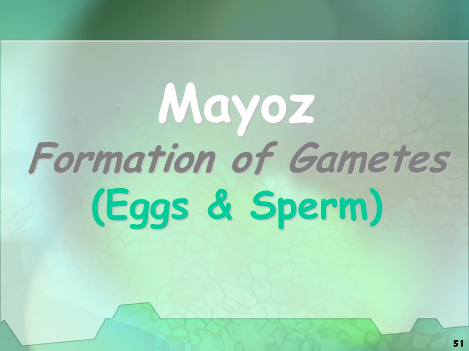51 Mayoz Formation of Gametes (Eggs & Sperm)