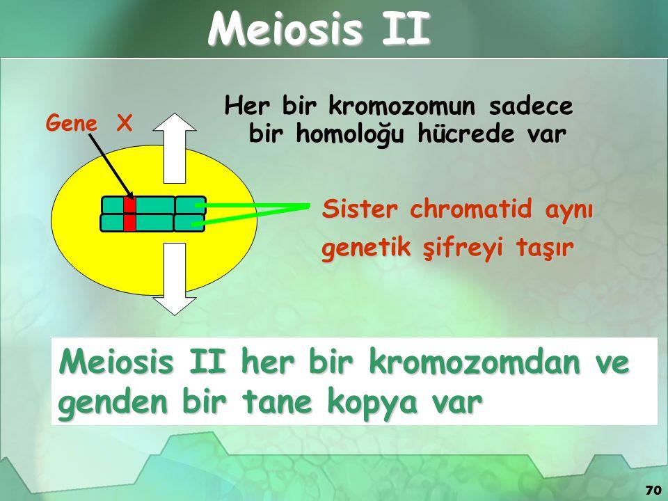 70 Meiosis II Her bir kromozomun sadece bir homoloğu hücrede var Meiosis II her bir kromozomdan ve genden bir tane kopya var Sister chromatid aynı gen