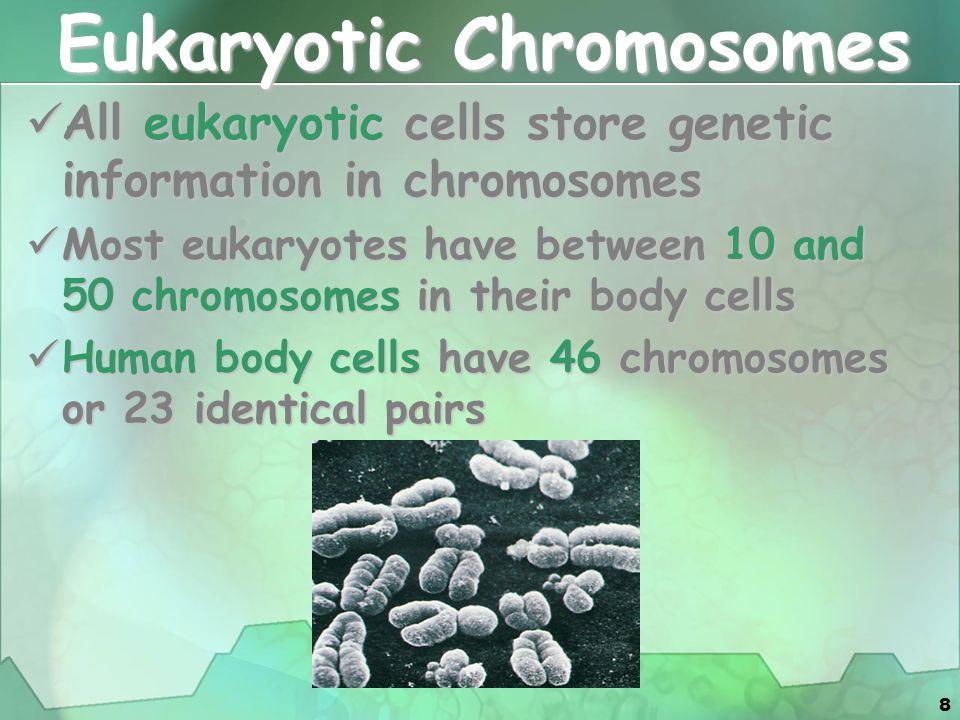8 Eukaryotic Chromosomes All eukaryotic cells store genetic information in chromosomes All eukaryotic cells store genetic information in chromosomes M