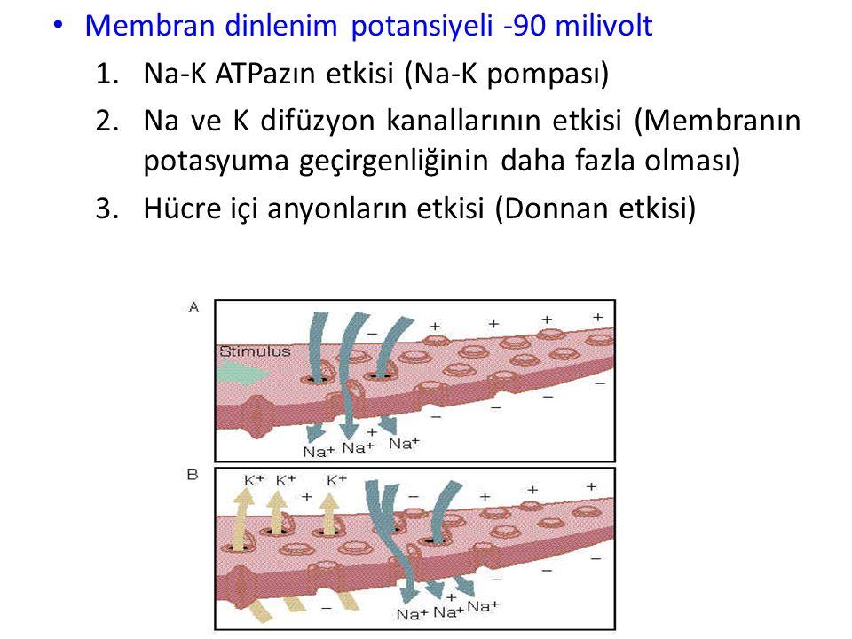 Goldman-Hodgkin-Katz Denkleminin Önemi 1* Na, K, Cl iyonları MSS'ndeki sinir hücrelerinde olduğu gibi, sinir ve kas liflerinde zar potansiyeli gelişim