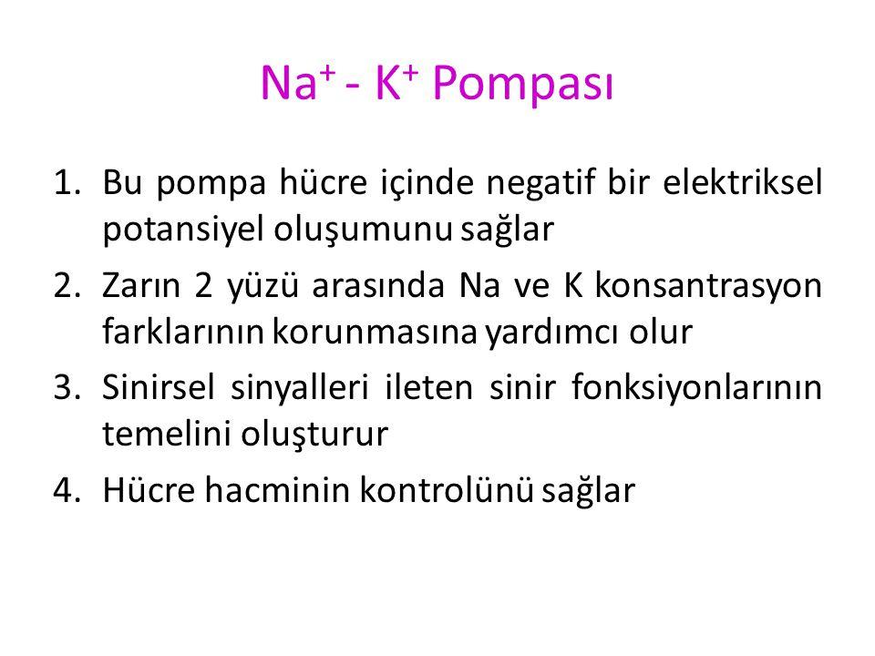 Na + - K + Pompası Vücuttaki bütün hücrelerin zarında bulunan bir pompadır. Görevi Na + u hücre dışına, K + u hücre içine pompalamaktır. Bu pompa içer