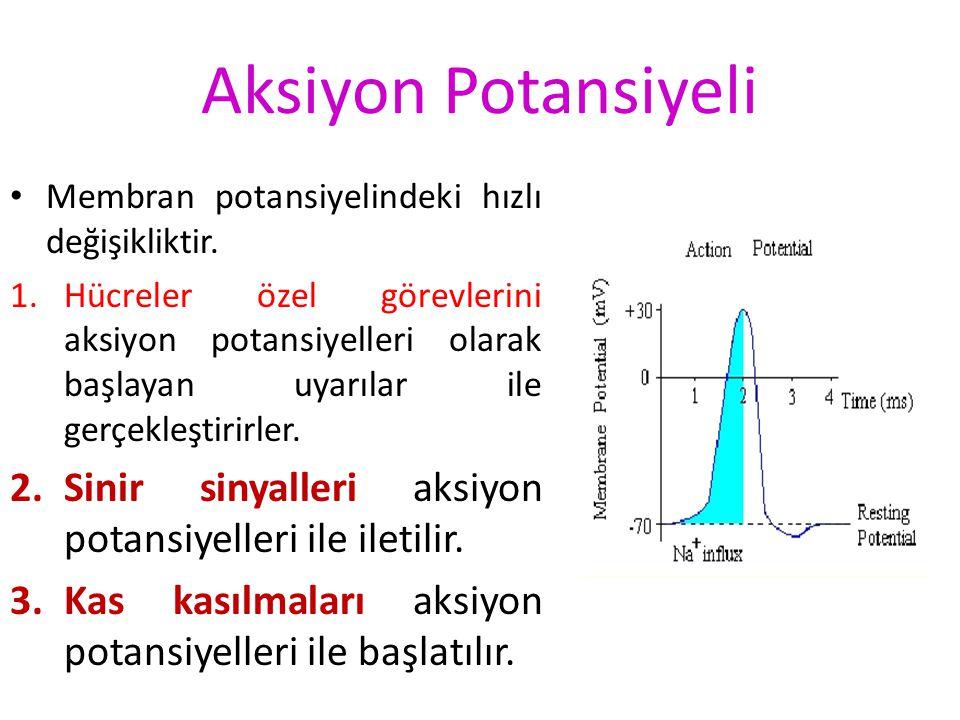 İyon Geçişinde Etkili Güçler Donnan etkisinin sonuçları Donnan etkisi X Y m K + Cl - Prot – K + X Cl - Y K + Y Cl - X Proteinler nedeniyle hücre içind