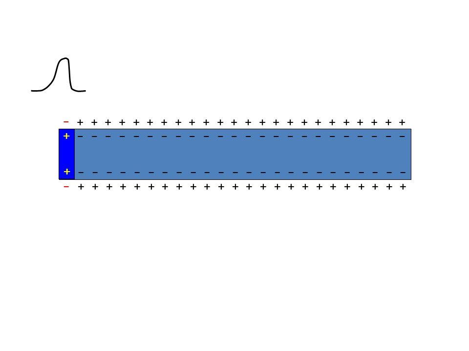 AP-kontraksiyon ilişkisi: AP iskelet kasında oldukça kısa sürelidir – AP biter bitmez kasılma ölçülebilir AP kalp kasında uzun sürelidir – AP ve kasıl