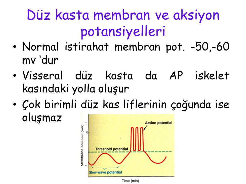 DÜZ KASLARIN SINIFLANDIRILMASI 1- TEK ÜNİTELİ DÜZ KASLAR (ÜNİTER- VİSSERAL) İnce barsaklar Safra kanalı Kolon Mesane Üreterler Uterus (myometriyum) Le
