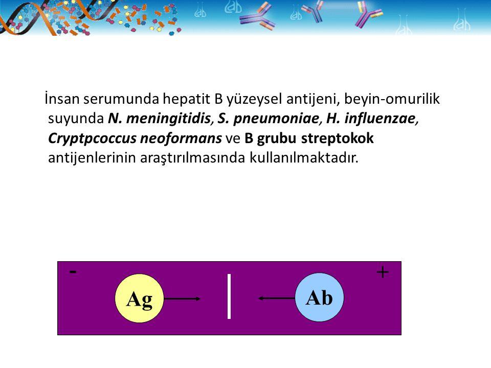 İnsan serumunda hepatit B yüzeysel antijeni, beyin-omurilik suyunda N. meningitidis, S. pneumoniae, H. influenzae, Cryptpcoccus neoformans ve B grubu