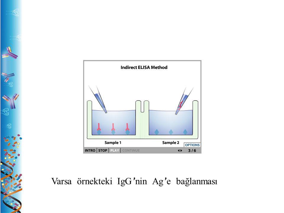 Varsa örnekteki IgG ' nin Ag ' e bağlanması