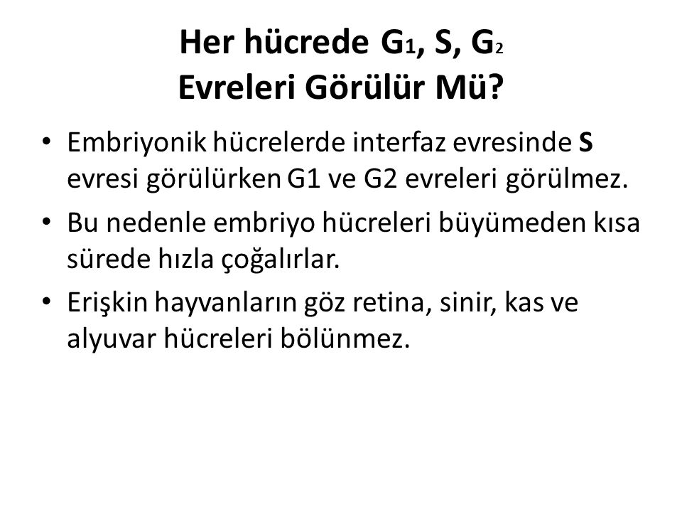Her hücrede G 1, S, G 2 Evreleri Görülür Mü? Embriyonik hücrelerde interfaz evresinde S evresi görülürken G1 ve G2 evreleri görülmez. Bu nedenle embri