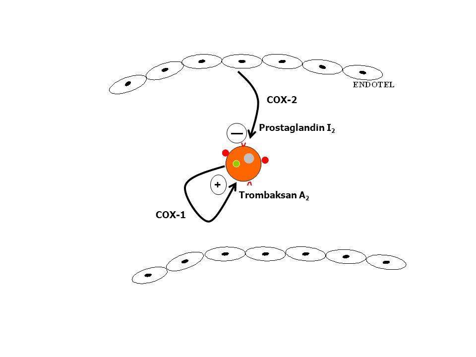 ENDOTEL Prostaglandin I 2 COX-1 COX-2 Trombaksan A 2 + —