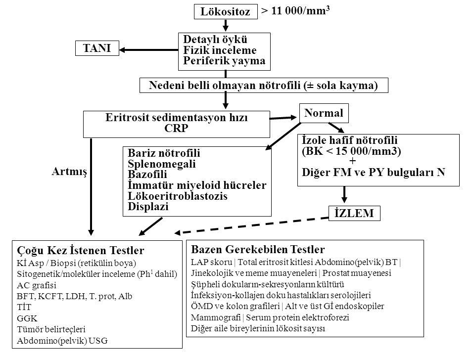Artmış > 11 000/mm 3 Lökositoz TANI Nedeni belli olmayan nötrofili (± sola kayma) İzole hafif nötrofili (BK < 15 000/mm3) + Diğer FM ve PY bulguları N
