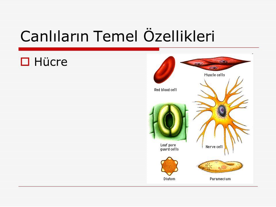Canlıların Temel Özellikleri  Hücre