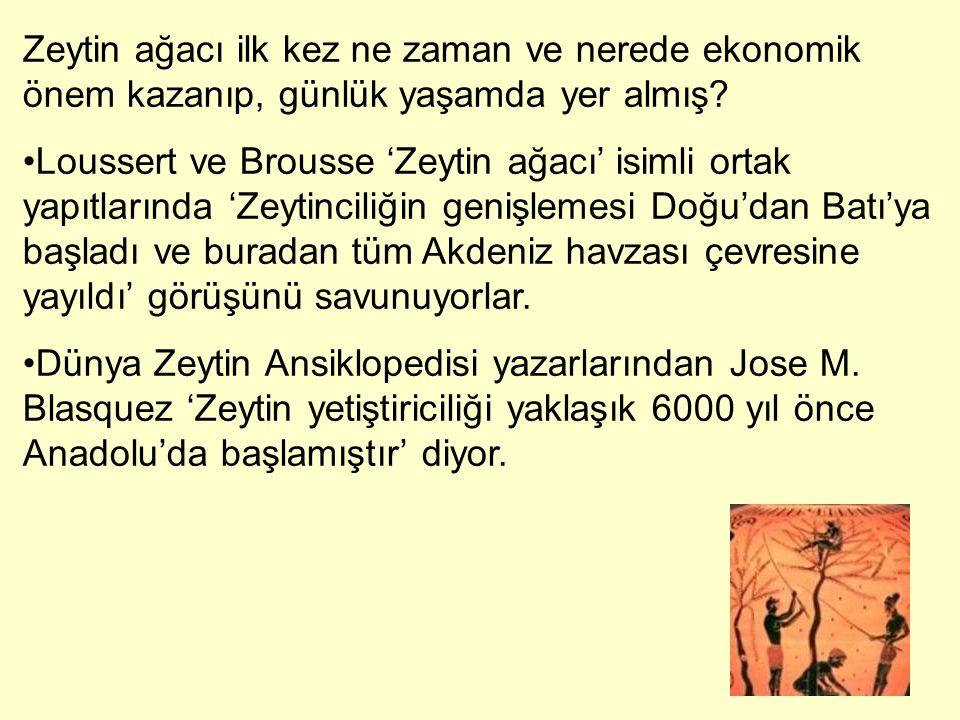 Zeytin ağacı ilk kez ne zaman ve nerede ekonomik önem kazanıp, günlük yaşamda yer almış? Loussert ve Brousse 'Zeytin ağacı' isimli ortak yapıtlarında