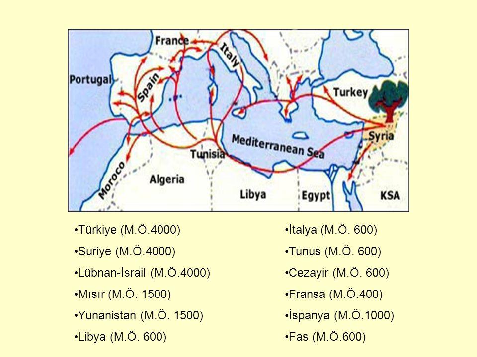 Türkiye (M.Ö.4000) Suriye (M.Ö.4000) Lübnan-İsrail (M.Ö.4000) Mısır (M.Ö. 1500) Yunanistan (M.Ö. 1500) Libya (M.Ö. 600) İtalya (M.Ö. 600) Tunus (M.Ö.