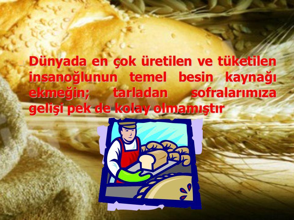 Dünyada en çok üretilen ve tüketilen insanoğlunun temel besin kaynağı ekmeğin; tarladan sofralarımıza gelişi pek de kolay olmamıştır Dünyada en çok ür
