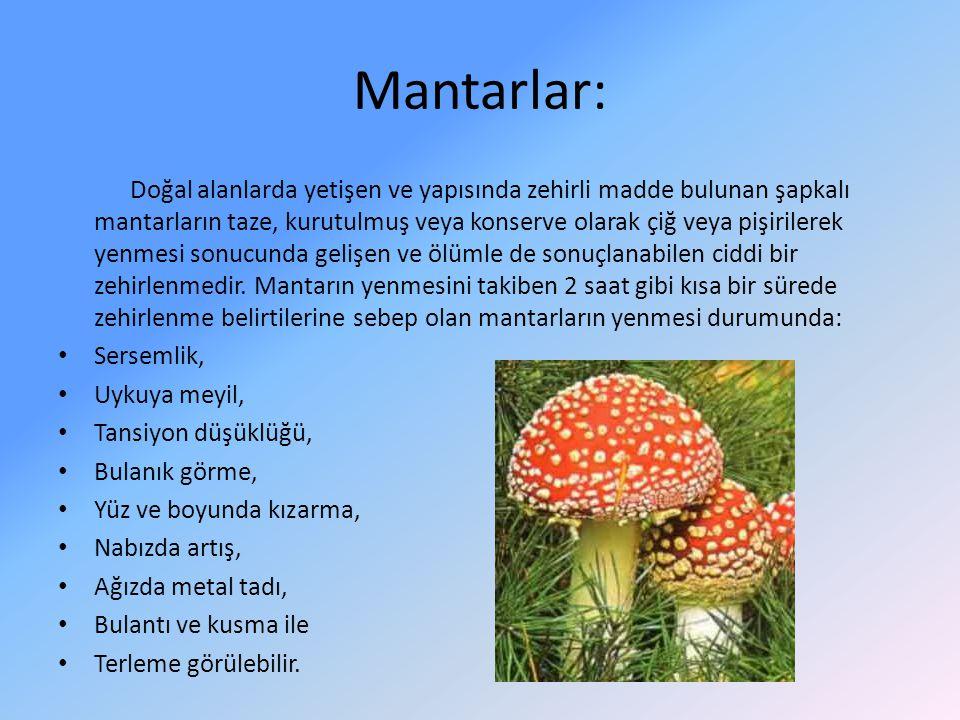 Mantarlar: Doğal alanlarda yetişen ve yapısında zehirli madde bulunan şapkalı mantarların taze, kurutulmuş veya konserve olarak çiğ veya pişirilerek y