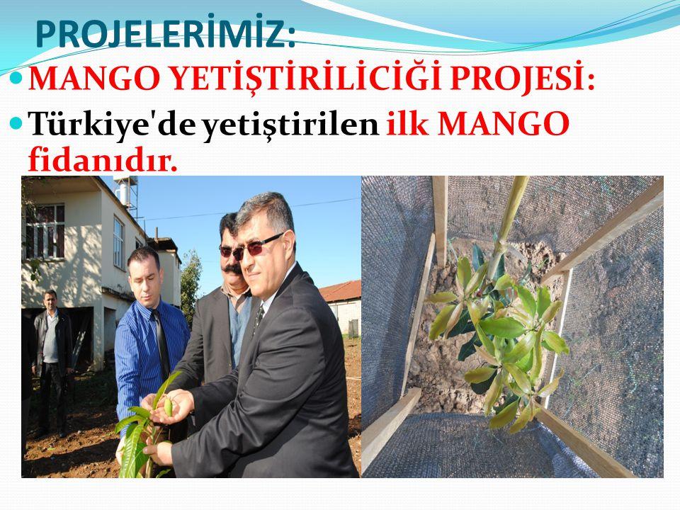 PROJELERİMİZ: MANGO YETİŞTİRİLİCİĞİ PROJESİ: Türkiye'de yetiştirilen ilk MANGO fidanıdır.