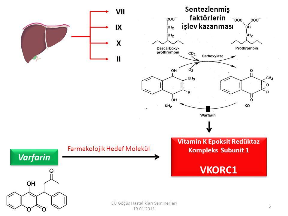 Varfarin Vitamin K Epoksit Redüktaz Kompleks Subunit 1 VKORC1 Sitokrom p450 (CYP) Family 2 Subfamily C Polipeptid 9 CYP2C9 Aynı bireyde biyolojik varyasyon oranı %11 Van Geest-Daalderop Jh, Thromb Haemost 2009 VKORC1*2 Polimorfizmi 1173C>T (7 SNP var) CYP2C9*2 Arg 144 Cys (3 SNP var) CYP2C9*3 İle 359 Leu Homozigotluk Heterozigotluk Metabolizma artışı 6 EÜ Göğüs Hastalıkları Seminerleri 19.01.2011