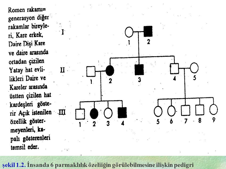 şekil 1.2. İnsanda 6 parmaklılık özeliiğin görülebilmesine ilişkin pedigri