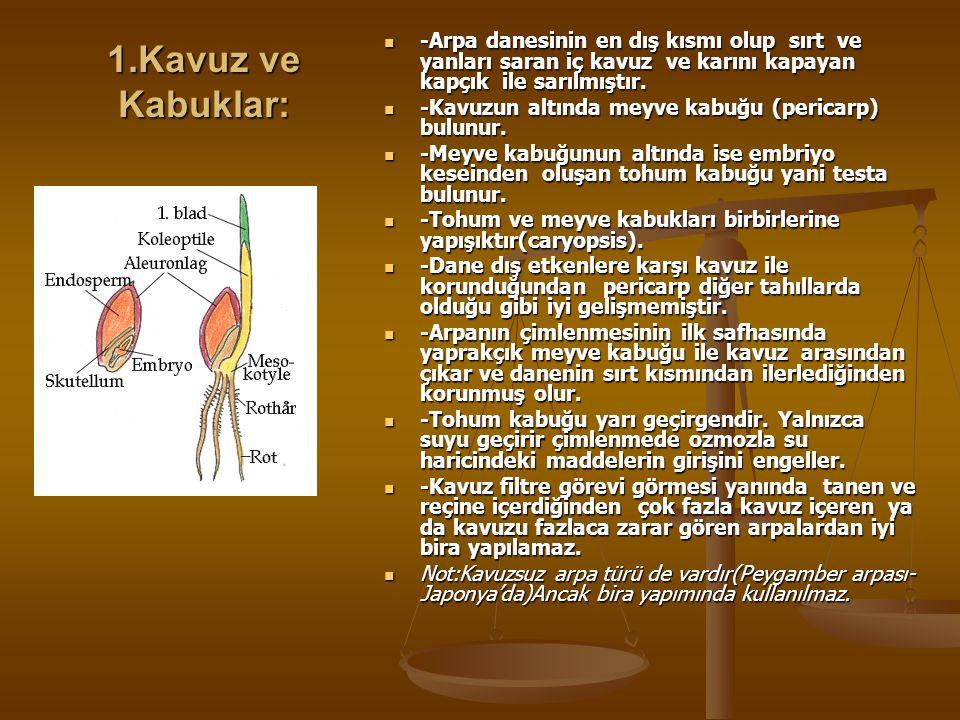 ARPA DANESİNİN ANATOMİSİ Arpa danesi hem meyve hem de tohum olup başlıca 3 kısma ayrılır. 1-Kavuz ve kabuklar 2-Endosperm 3-Embriyo(ruşeym)