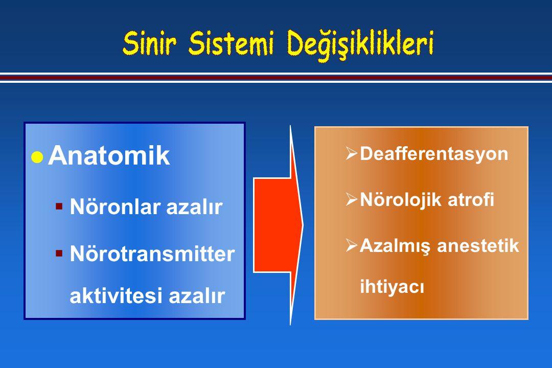 l Anatomik  Nöronlar azalır  Nörotransmitter aktivitesi azalır  Deafferentasyon  Nörolojik atrofi  Azalmış anestetik ihtiyacı