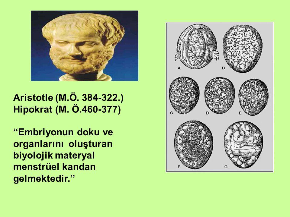"""Aristotle (M.Ö. 384-322.) Hipokrat (M. Ö.460-377) """"Embriyonun doku ve organlarını oluşturan biyolojik materyal menstrüel kandan gelmektedir."""""""