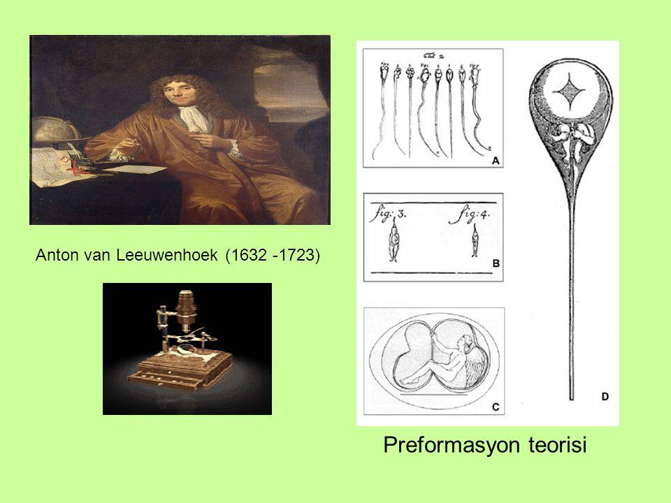 Wilhelm Oscar Hertwig (1849 – 1922) Zigot nükleusu iki farklı nüklesun birleşmesinden oluşur: germinal vesikülden gelen dişi nükleus ve penetre olan spermden gelen erkek nükleus