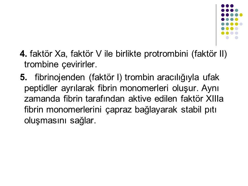 4.faktör Xa, faktör V ile birlikte protrombini (faktör II) trombine çevirirler.