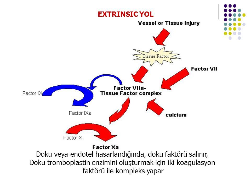 Doku veya endotel hasarlandığında, doku faktörü salınır, Doku tromboplastin enzimini oluşturmak için iki koagulasyon faktörü ile kompleks yapar EXTRINSIC YOL
