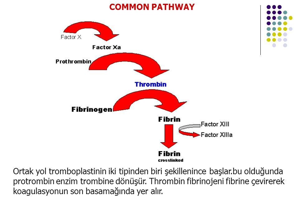 Ortak yol tromboplastinin iki tipinden biri şekillenince başlar.bu olduğunda protrombin enzim trombine dönüşür.