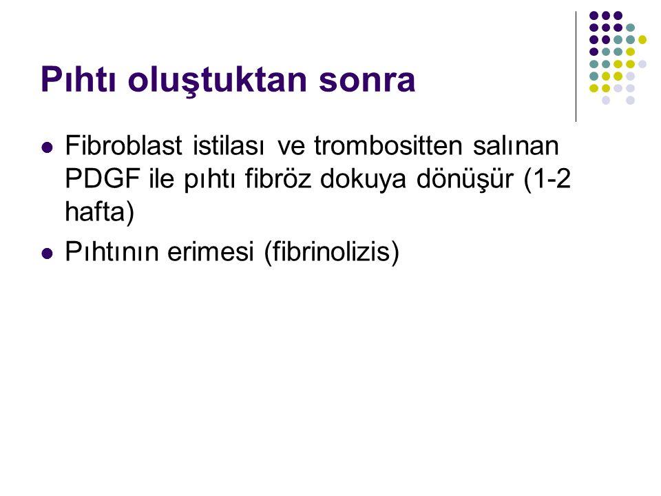 Pıhtı oluştuktan sonra Fibroblast istilası ve trombositten salınan PDGF ile pıhtı fibröz dokuya dönüşür (1-2 hafta) Pıhtının erimesi (fibrinolizis)