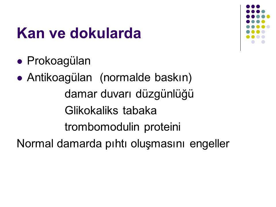 Kan ve dokularda Prokoagülan Antikoagülan (normalde baskın) damar duvarı düzgünlüğü Glikokaliks tabaka trombomodulin proteini Normal damarda pıhtı oluşmasını engeller