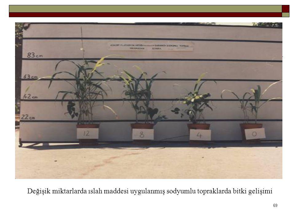 Değişik miktarlarda ıslah maddesi uygulanmış sodyumlu topraklarda bitki gelişimi 69