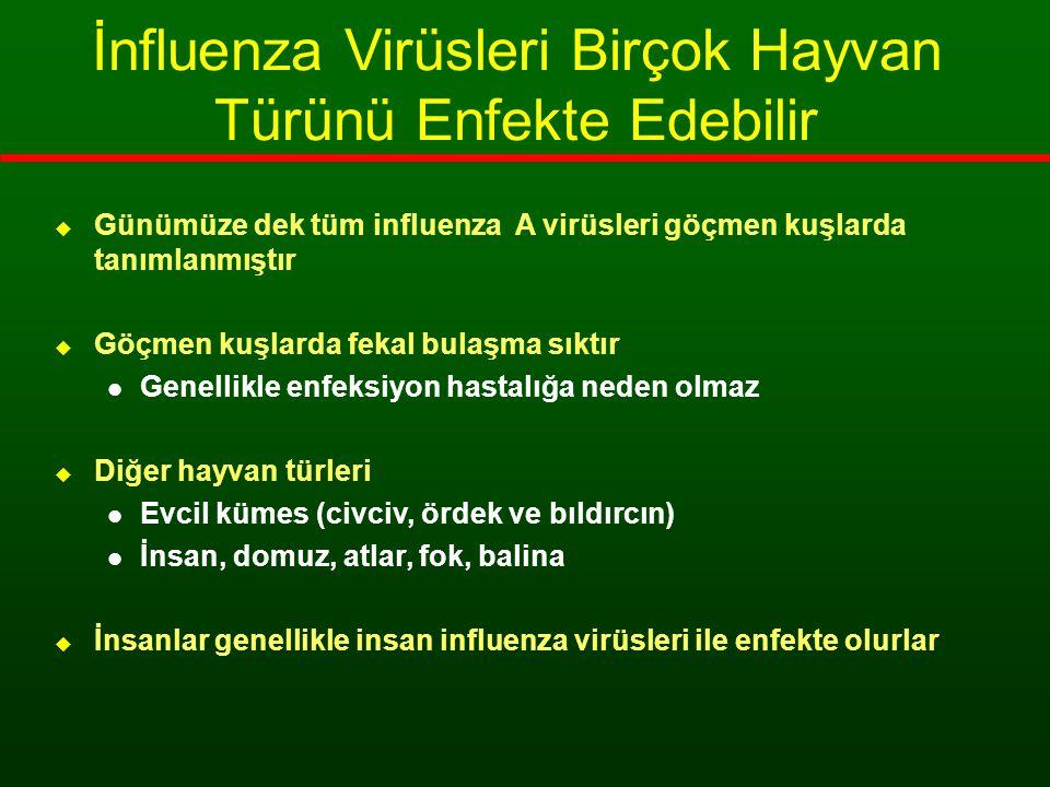 İnfluenza Virüsleri Birçok Hayvan Türünü Enfekte Edebilir  Günümüze dek tüm influenza A virüsleri göçmen kuşlarda tanımlanmıştır  Göçmen kuşlarda fe