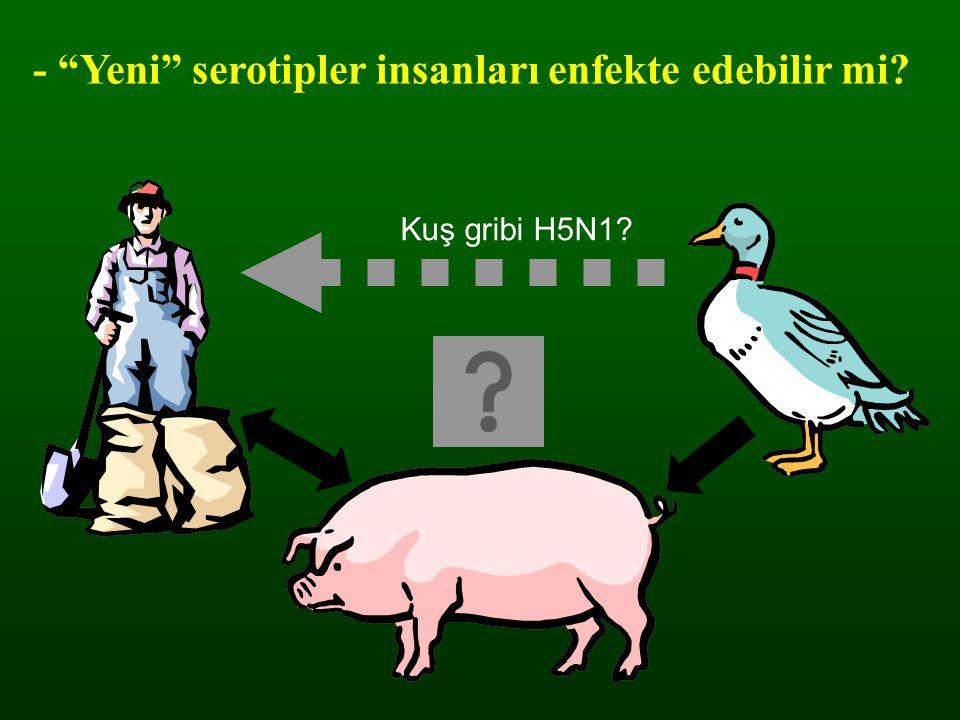 """- """"Yeni"""" serotipler insanları enfekte edebilir mi? Kuş gribi H5N1?"""