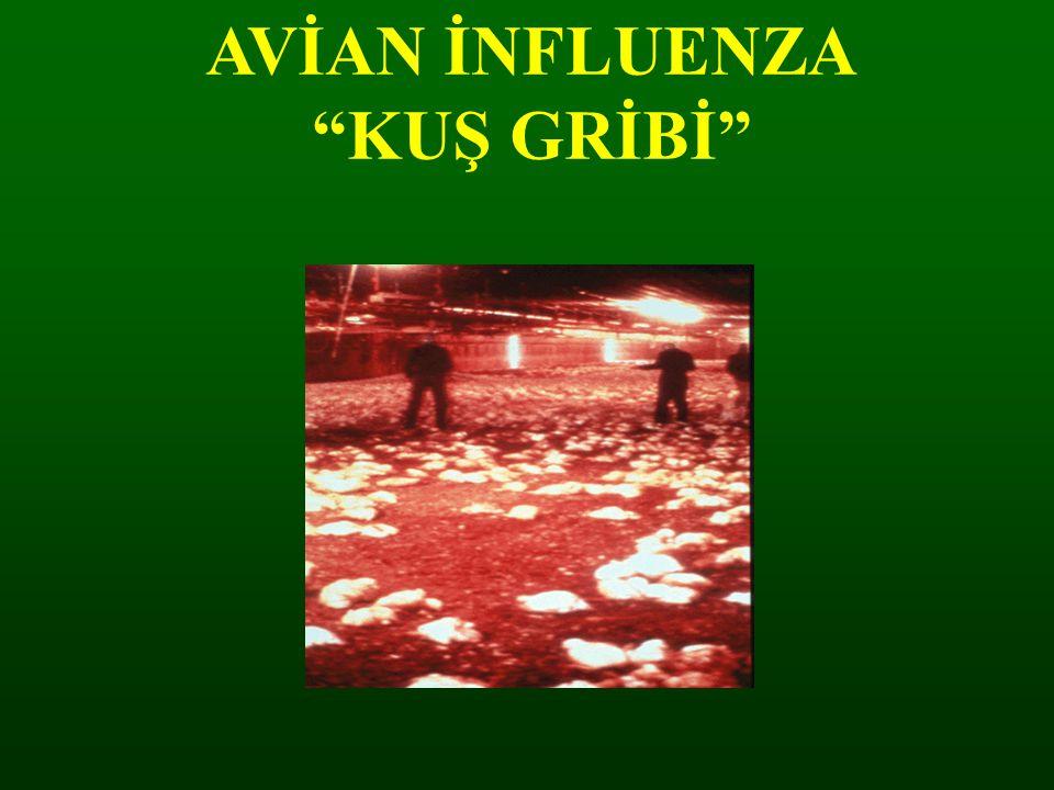 "AVİAN İNFLUENZA ""KUŞ GRİBİ"""