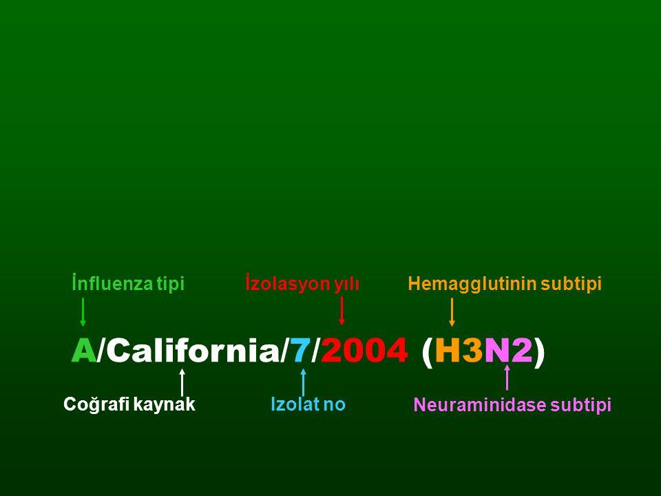 İnfluenza tipiHemagglutinin subtipi Coğrafi kaynak A/California/7/2004 (H3N2) İzolasyon yılı Izolat no Neuraminidase subtipi