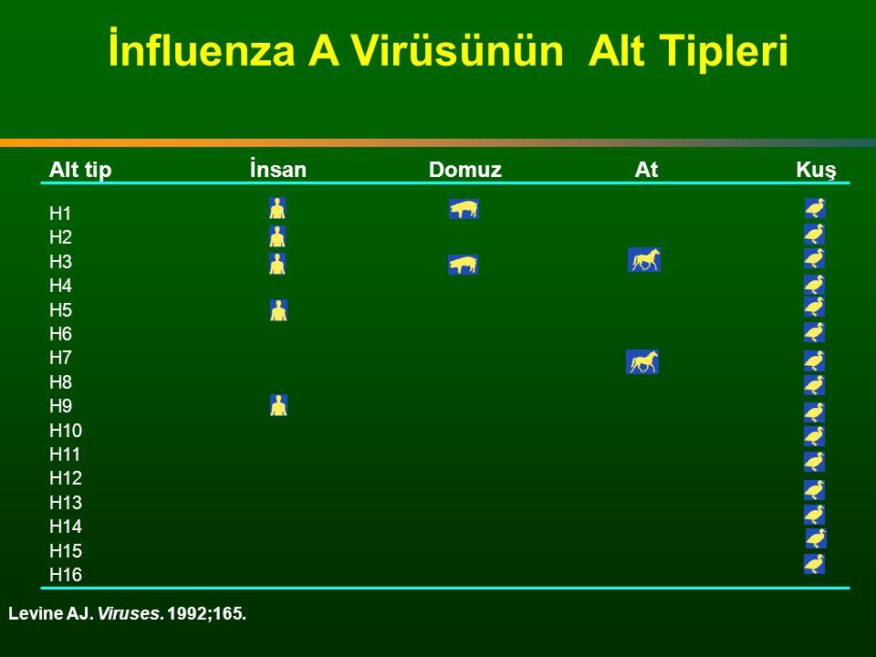 Levine AJ. Viruses. 1992;165. İnfluenza A Virüsünün Alt Tipleri Alt tipİnsanDomuzAtKuş H1 H2 H3 H4 H5 H6 H7 H8 H9 H10 H11 H12 H13 H14 H15 H16