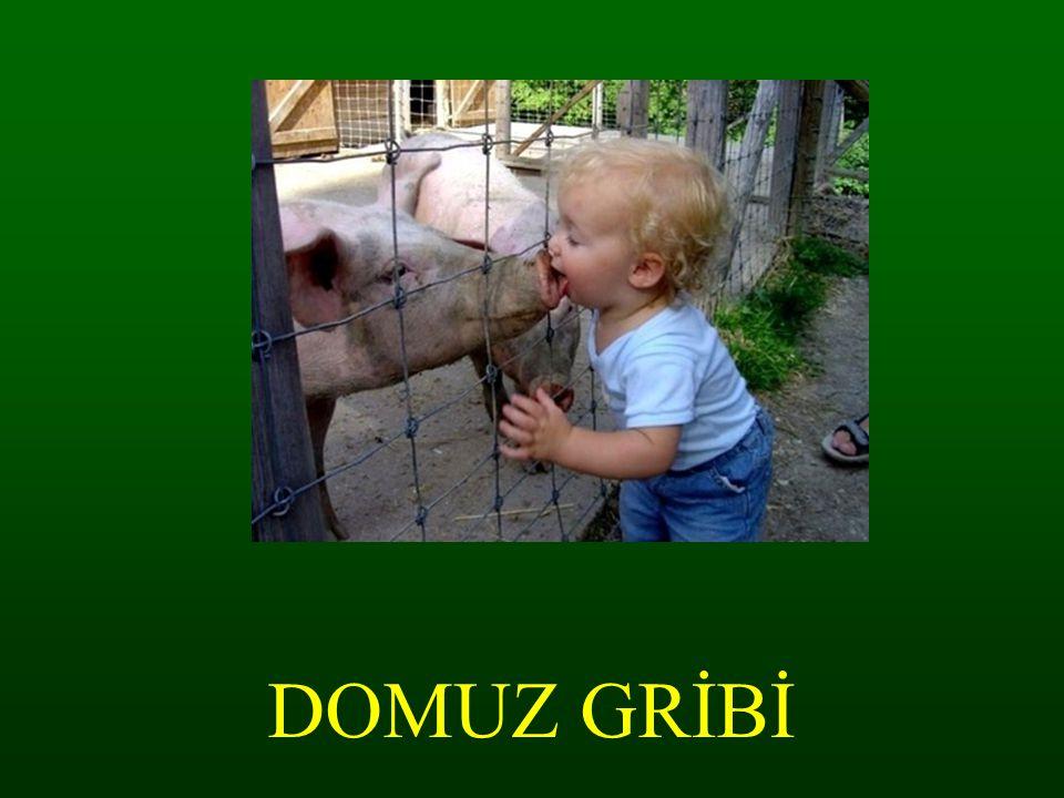 DOMUZ GRİBİ