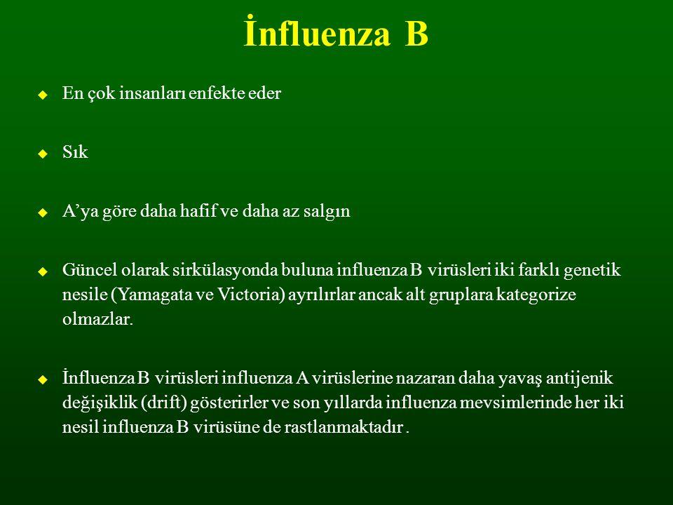 1968'den beri Yeni İnfluenza Virüsleri 1976 – H1N1 Swine flu 1986 – H1N1 Swine virus 1988 – H1N1 Swine virus 1993 –Swine/avian recombinant 1995 – H7N7 Duck virus 1997 – H5N1 Avian virus 1999 – H9N2 Quail virus 2003– H5N1 Avian virus 2003 – H7N7 Avian virus 2004 – H5N1 Avian virus Yeni influenza virusleri ile insanlarda görülen enfeksiyonların zaman akışı (1968 pandemisinden itibaren) 2004 – H7N3 Avian virus 2004 – H7N1 Avian virus