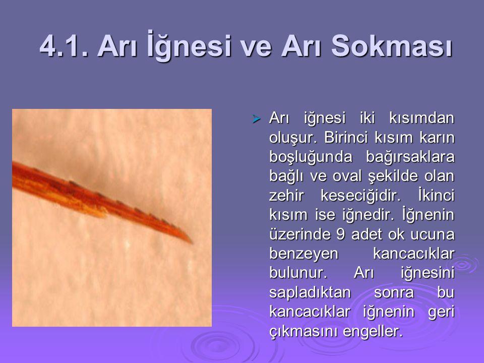4.1. Arı İğnesi ve Arı Sokması 4.1. Arı İğnesi ve Arı Sokması  Arı iğnesi iki kısımdan oluşur. Birinci kısım karın boşluğunda bağırsaklara bağlı ve o
