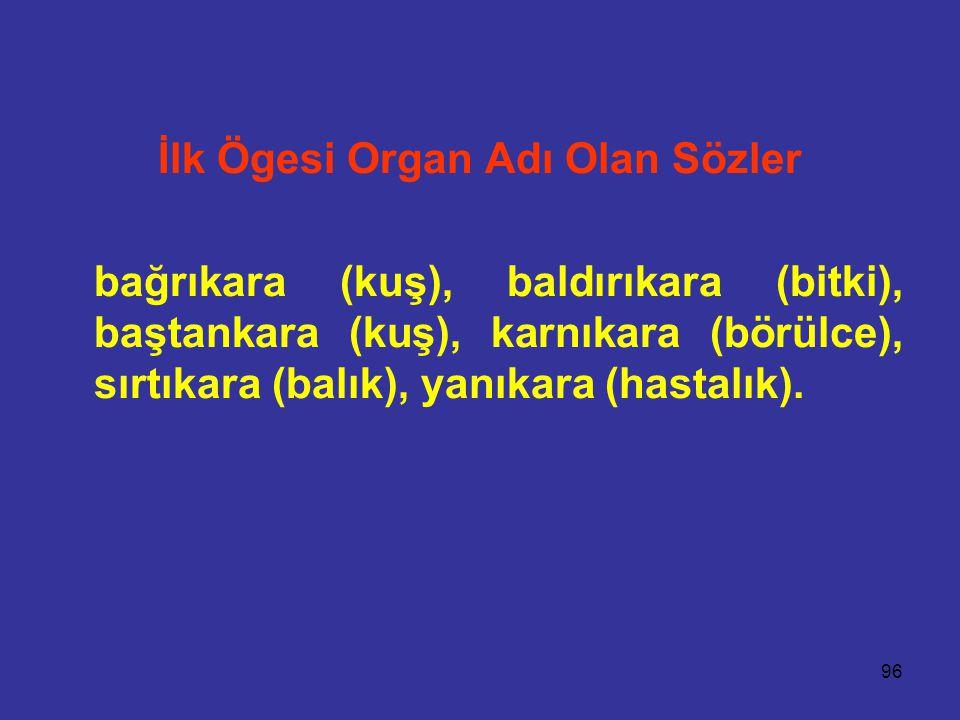 96 İlk Ögesi Organ Adı Olan Sözler bağrıkara (kuş), baldırıkara (bitki), baştankara (kuş), karnıkara (börülce), sırtıkara (balık), yanıkara (hastalık).