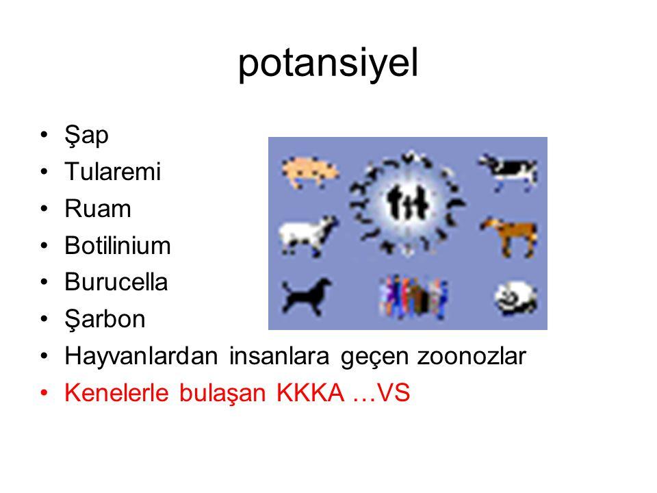 potansiyel Şap Tularemi Ruam Botilinium Burucella Şarbon Hayvanlardan insanlara geçen zoonozlar Kenelerle bulaşan KKKA …VS