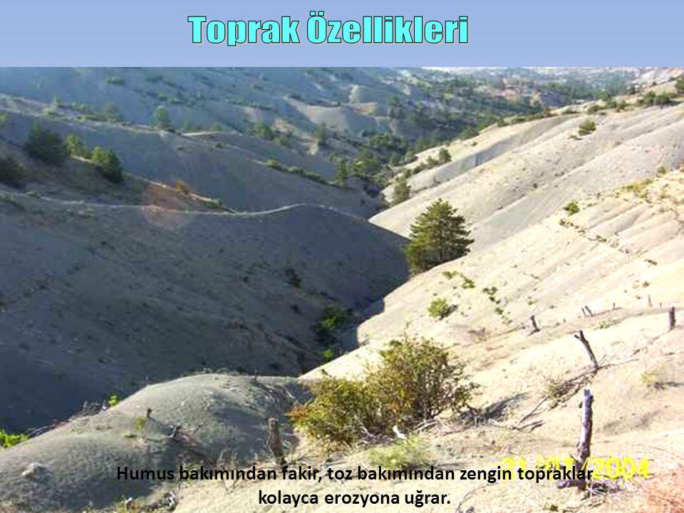 Humus bakımından fakir, toz bakımından zengin topraklar kolayca erozyona uğrar.