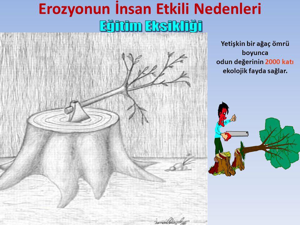 Erozyonun İnsan Etkili Nedenleri Yetişkin bir ağaç ömrü boyunca odun değerinin 2000 katı ekolojik fayda sağlar.