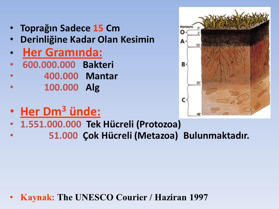 Toprağın Sadece 15 Cm Derinliğine Kadar Olan Kesimin Her Gramında: 600.000.000 Bakteri 400.000 Mantar 100.000 Alg Her Dm 3 ünde: 1.551.000.000 Tek Hüc