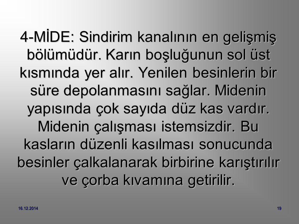16.12.201419 4-MİDE: Sindirim kanalının en gelişmiş bölümüdür.