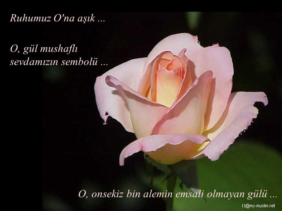 O, gül mushaflı sevdamızın sembolü... O, onsekiz bin alemin emsali olmayan gülü... Ruhumuz O'na aşık...